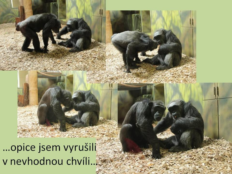 zoo31