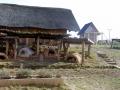 archeopark_08
