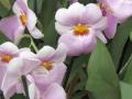 botanicka_zahrada_01