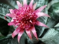 botanicka_zahrada_04
