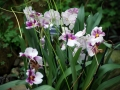 botanicka_zahrada_05