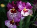 botanicka_zahrada_07