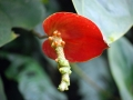 botanicka_zahrada_11