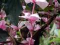 botanicka_zahrada_18