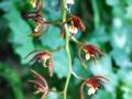 botanicka_zahrada_20