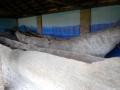 archeopark_32
