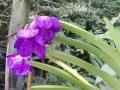 botanicka_07