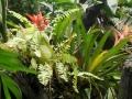 botanicka_09