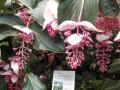 botanicka_10
